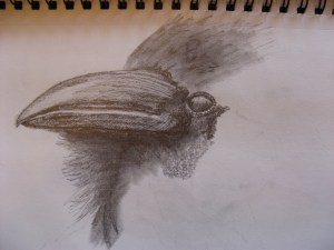 Ravens Beak